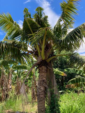 Heavily Damaged Palm Photo