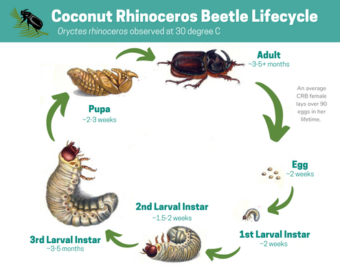 Lifecycle CRB- 11_30_20 (1).png