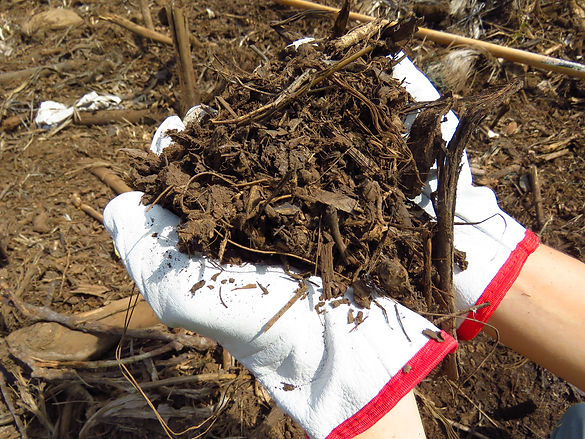 Hands holding mulch gardening.jpg