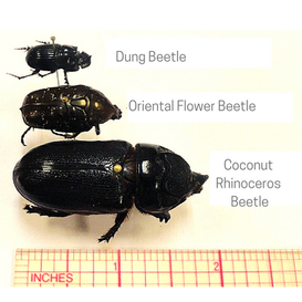 Beetle PNG for Website.png