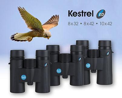 kestrel-1.jpg