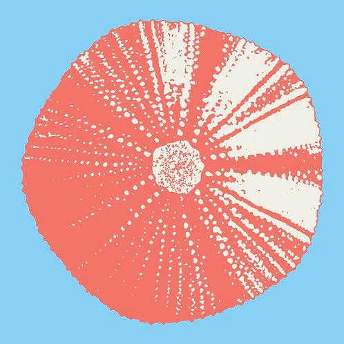 Julie Pritchard 'Sea Urchin'