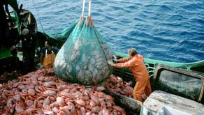Seaspiracy: The Dangers of Industrial Fishing