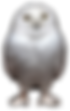 White Owl.png