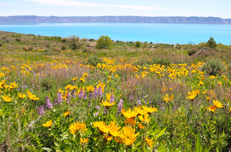 Spring Flowers and Lake.jpg