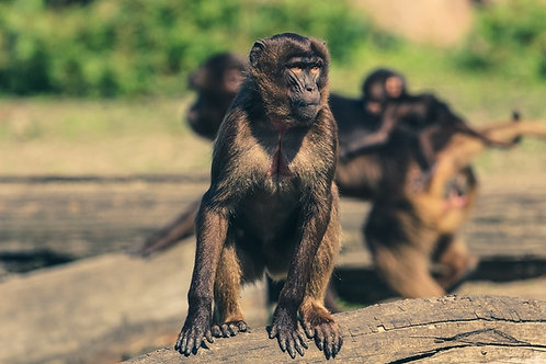 Manage your Monkeys - PDF Version