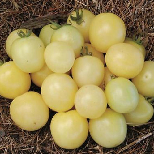 Tomates «Cerise Blanche Mirabelle»