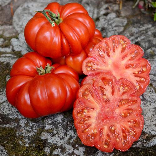 """Tomates """"Costoluto di fiorentino"""""""