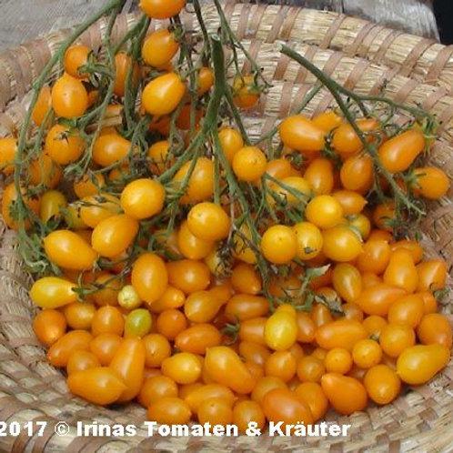 """Tomates Sauvages Des Iles Galapagos """"Cheesmani"""""""