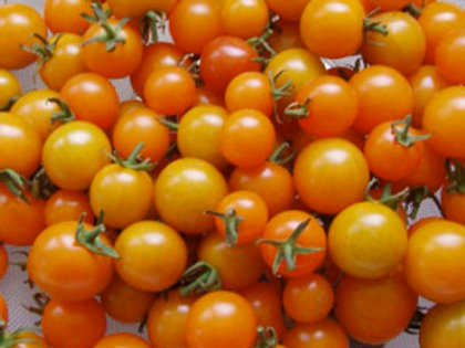 Tomates «Sungold»