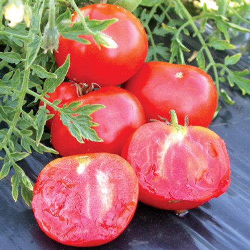 "Tomates ""Silvery Fir Tree"""
