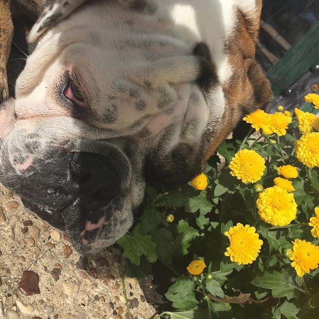 Winston loves flowers..