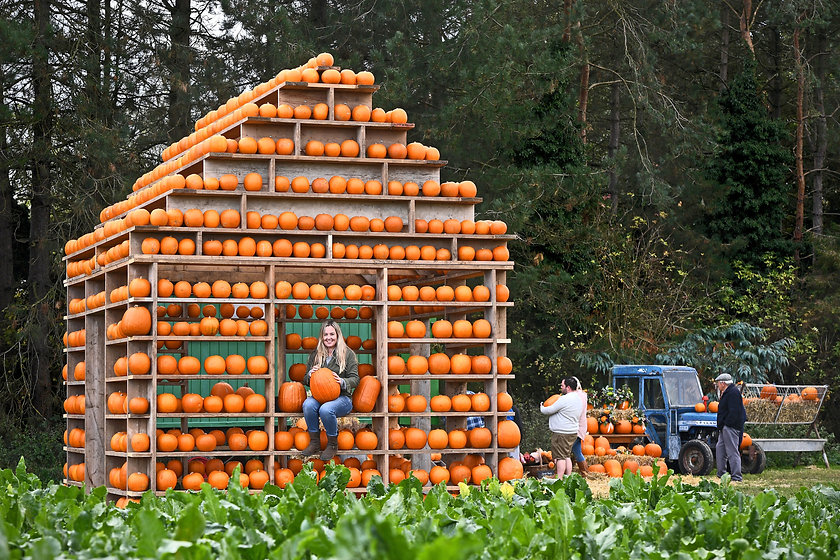 The Pumpkin House 1.jpg