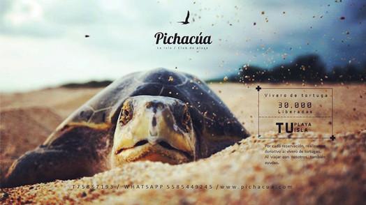 PLAYA, Pichacúa la isla