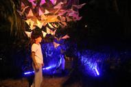 Ecology Of Light Workshop