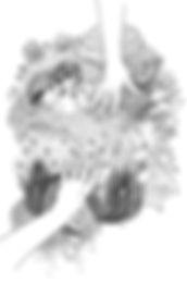 fly-dessin-final - copie.jpg