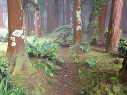 la forêt Sete Fontes de São Jorge