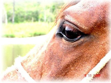 cavalo_olho.jpg