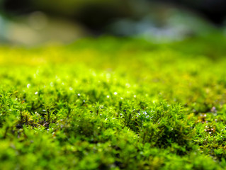 Managing Moss In Your Lawn