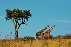 12 DAYS IN KENYA