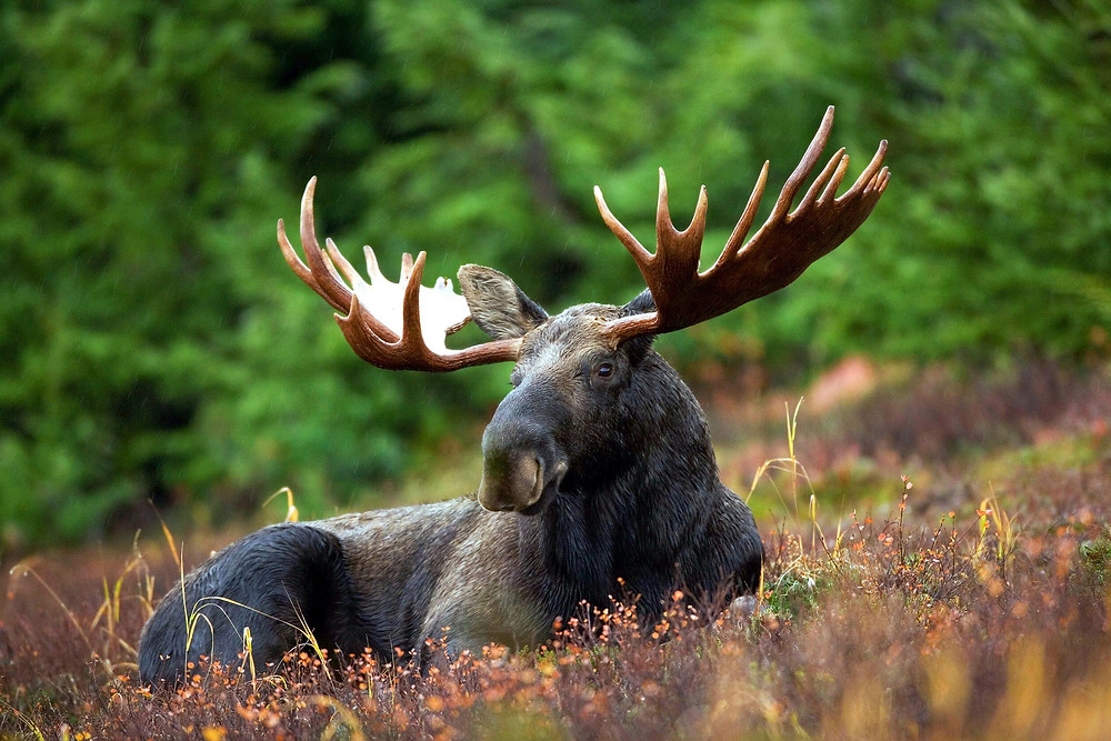 how to see the wildlife in Alaska