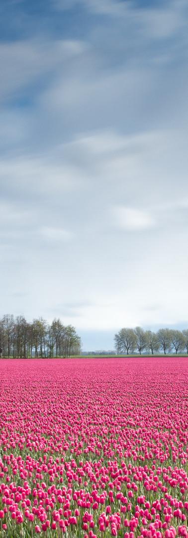 eddie-hooiveld-89533.jpg
