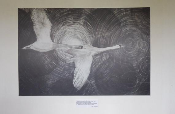 swans in kirk.jpg