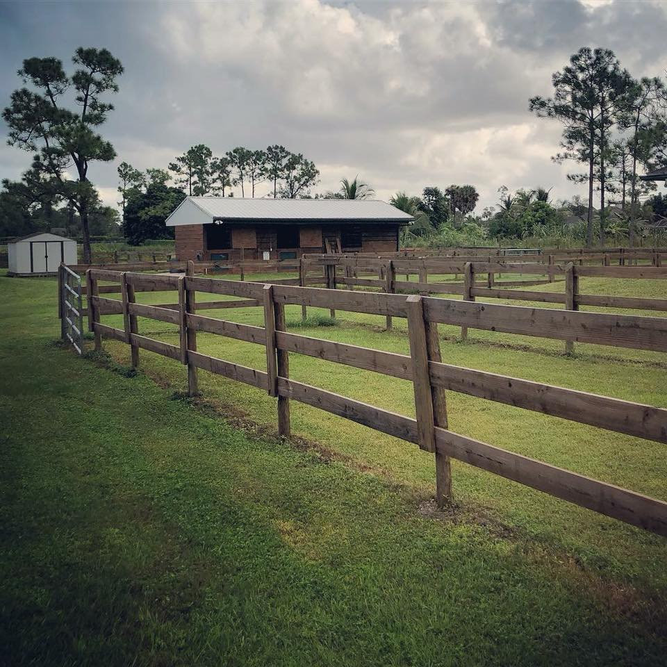 Equine-Assisted Psychotherapy, Activities, & Learning
