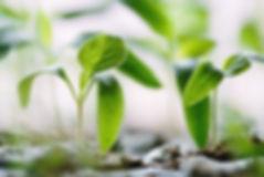 Jeune pousse de plante. L'engagement de Turtle envers notre manière de produire. Bio pour la planète, vegan.