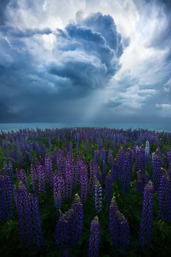 Photograph by William Patino