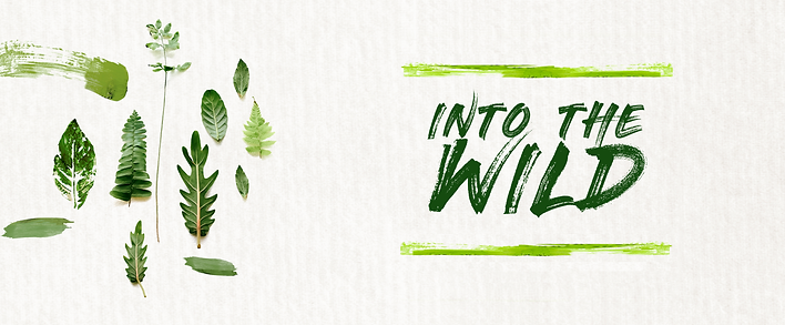 Into the Wild_Workshop banner.png