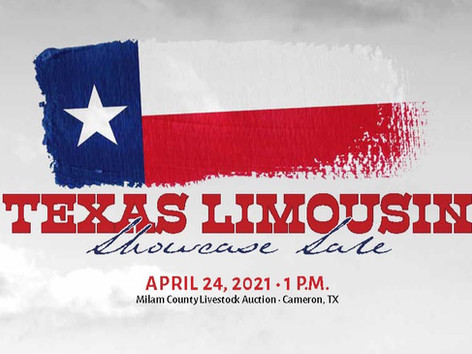 Texas Limousin Showcase Sale Report