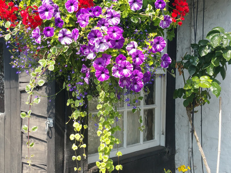 Our famous hanging baskets