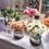Thumbnail: Flower Bar
