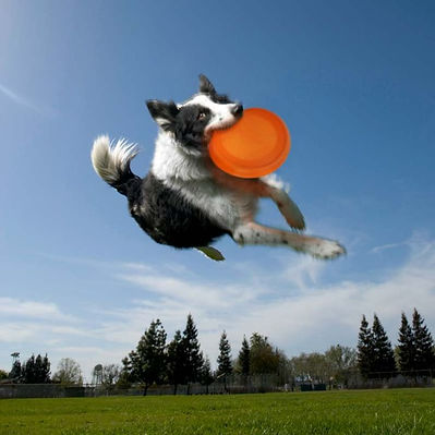 Salmon Oil For Dog Plus Sardine Anchovy Oil For Dogs From