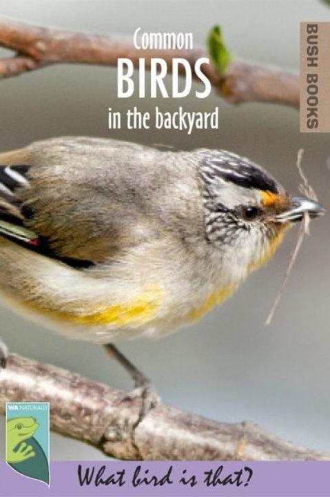Common Birds in the Backyard