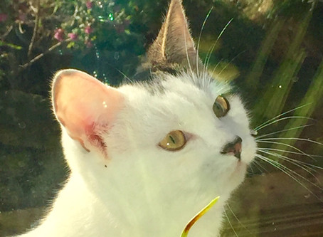 A Day In The Life of Lottie #Paw Seasons Boutique Feline Hotel #Luxury Cattery #Cats