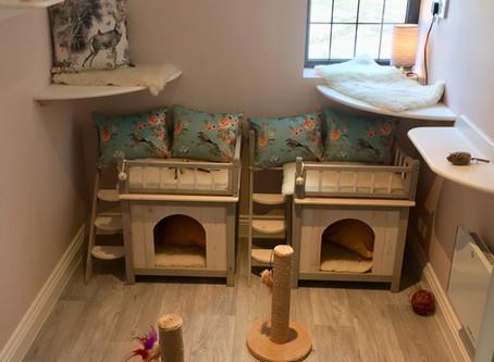 The Cattery V's The Petsitter V's  Paw Seasons Boutique Feline Hotel....
