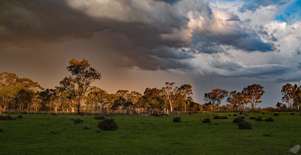Storm over the cattle yards
