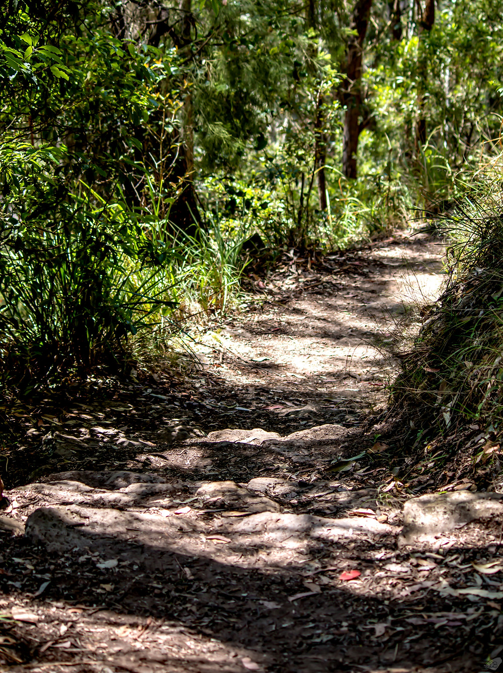 Path to Queen Mary Falls, Killarney, Qld
