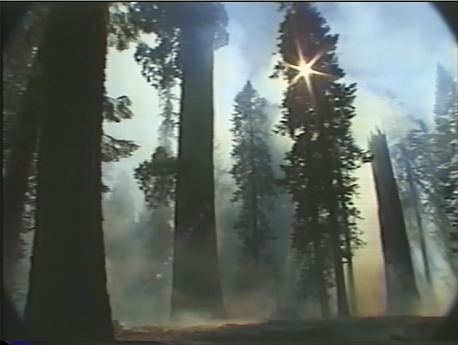 "Still from the Sequoia Kings Canyon National Park Videotape Collection, ""Non-edited Video Footage: Giant Forest Restoration Project – Restoration Work in the Round Meadow Area (Tape 5 of 6),"" VHS, color silent, 1999"