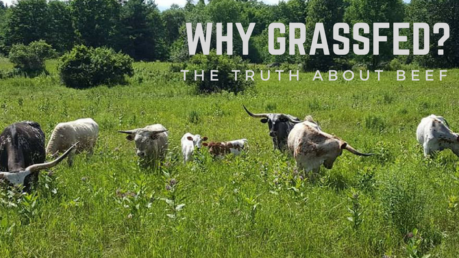 Why Grassfed? The Truth About Beef