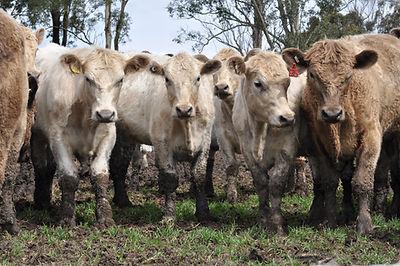 BAS offers manure spreading, fertiliser spreading, compost spreading, manure sales, bulk haulage, livestock sales.