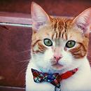 Wili el gato con moño