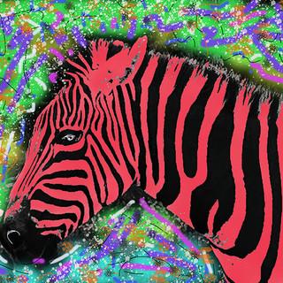 Dreamed of Zebras