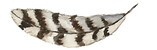 Feather Rustic 7...png