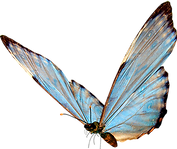 Butterfly (55).png