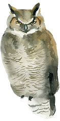 owl-1.png