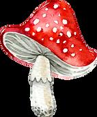 WildMushroomsElements_02.png