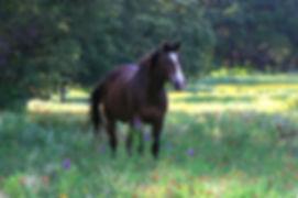 Miller's Equine Shallowbee